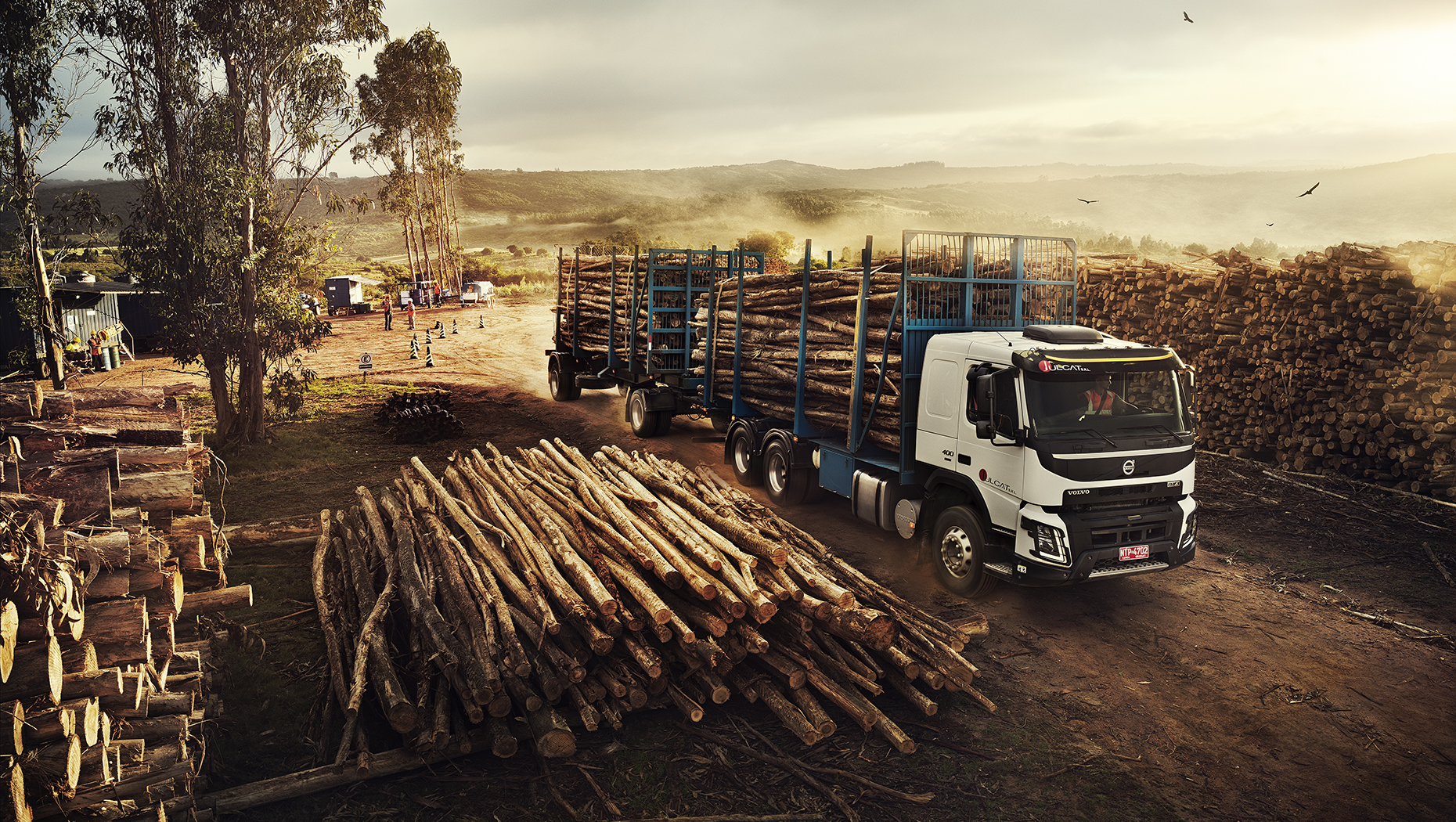Loading eucalyptus logs