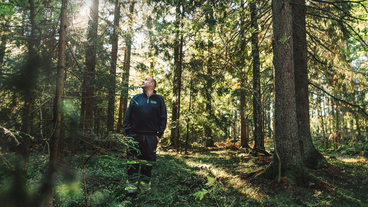 Bert Johansson in the forest